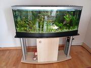 Aquarium 200 l - Panoramabecken