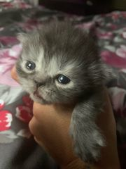 zwei süße Perser kitten mit