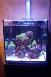 Red Sea Nano Reefer Aquarium