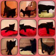 Baby Katze Beria 4 Monate