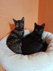 Katzen Geschwister Batman und Robin