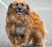 Howard kleiner Hundemann ca 8