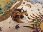Temporäre Unterkunft für Katzenliebhaber -