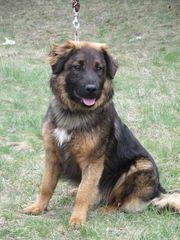 Linzo wäre gerne IHR Familienhund