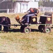 Pony-Kutsche Zweispänner mit Bremsen
