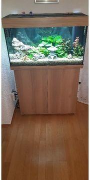 Aquarium der Marke Juwel Aquarium