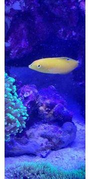 Fluval M60 Meerwasseraquarium komplett