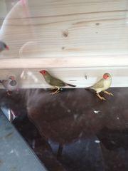 mehrere vogelarten