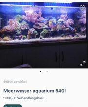 meerwasser aquarium 540l