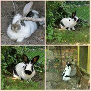 2 Kaninchen Jack und Louis