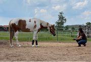 Pferdetrainer Bodenarbeit
