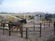 Führanlagen halten Ihre Pferde fit