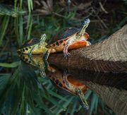 Wasserschildkröten mit Zubehör gesucht
