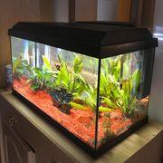 Aquarium 60 l mit Besetzung