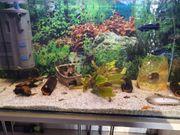 Aquarium Komplett Set 120L