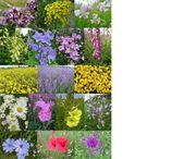 Samen NUR HEIMISCHE ARTEN Wildblumen