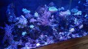 Meerwasser Aquarium Meerwasseraquarium komplett