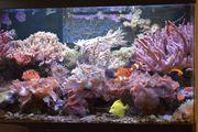 Meerwasseraquarium Auflösung - gesamter Besatz - Lebendgestein