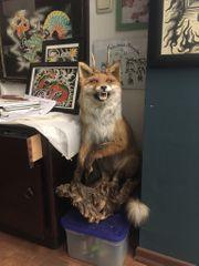 Wolpertinger Präparat Fuchs
