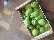 Chayote Frucht