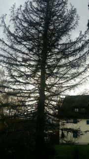 Suche einen Baumfäller