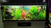 Aquarium Komplettbecken 450l mit viel