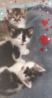 Verschenke Baby Kätzchen