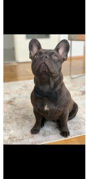 Französische Bulldogge Decken