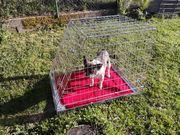 Hunde Transportkäfig neu