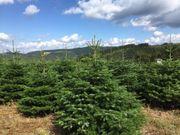 Nordmanntannen Weihnachtsbaum