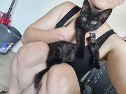 Kleines Katzenmädchen sucht neues Zuhause