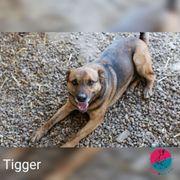 Tigger - Braucht jetzt einfach mal