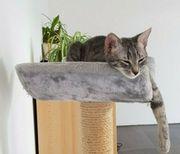 Katze vermisst - BELOHNUNG 100 EUR