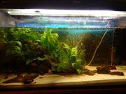 Schönes Aquarium AQUAEL 80 Liter