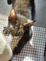 Katzenbaby Katze Babykatze Kitten