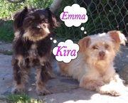 Kleine Hündinnen - Kira und Emma -
