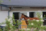 Pferdeboxen in Tiefenthal Nähe Grünstadt