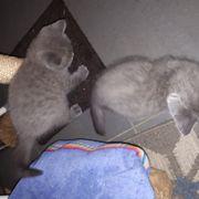 Katzen kitty