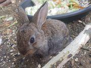 Kaninchenbabys Weibchen Männchen Hasen