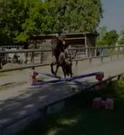 Pferdemädchen sucht Rb