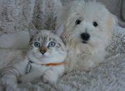 Tiersitter für Hund Katze Maus