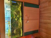 Aquarium 100x50x40 Moschusschildkröten Barsche