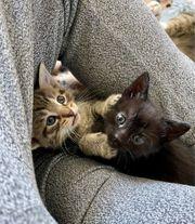 Royale Kitten suchen DICH