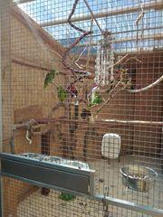 Gebe ihren Papageien und Kakadus