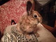 Liebes Kaninchen Baby zu Abgabe