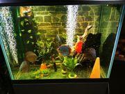 biete Ihren Fischen Aquarium und
