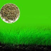 6 verschiedene Sorten Aquarienpflanzensamen