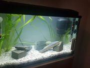 54 Liter Aquarium mit Besatz