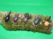 Spielzeug Käfer aus PVC 5