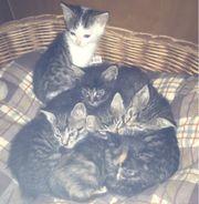 Kätzchen zur Abgabe